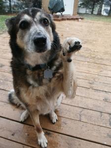 Dog Photo - Loyalty