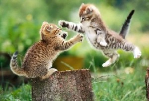 kitten fight