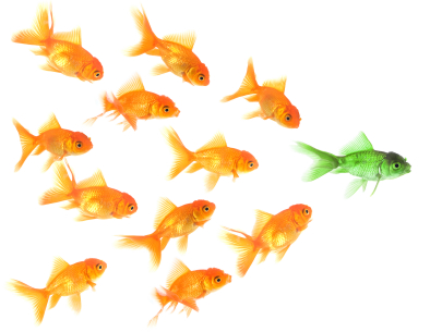 gold fish being led by a single green fish